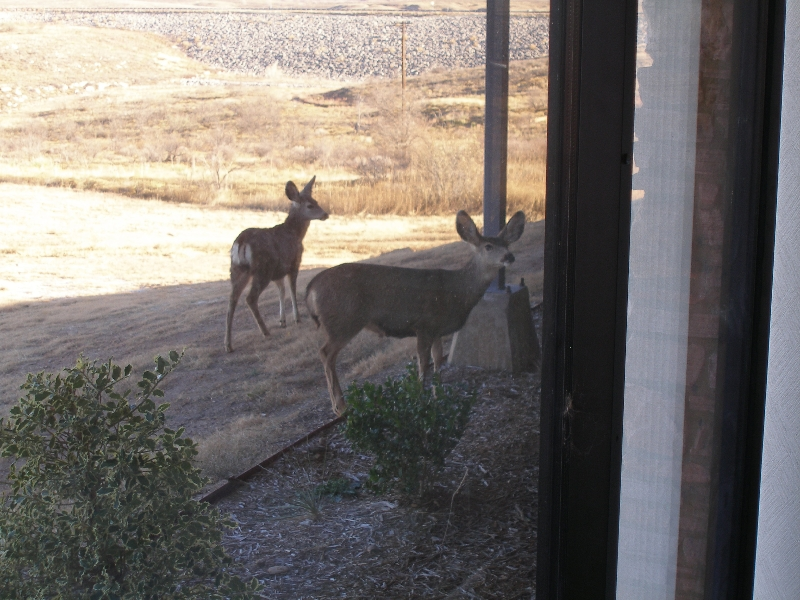 Morning Visitors